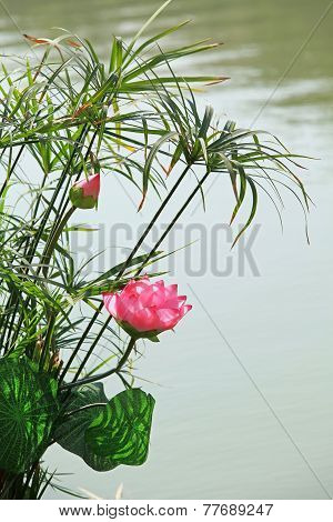 Lotus flower on Hoan Kiem lake, Hanoi capital, Vietnam