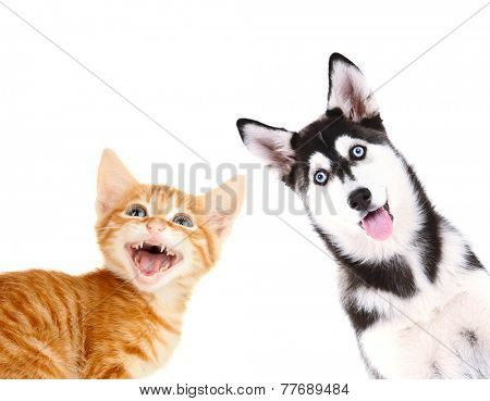 Little red kitten and  husky puppy isolated on white