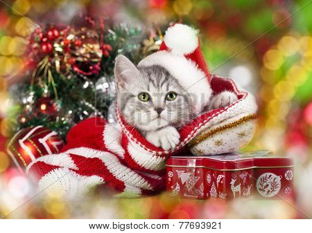 kitten christmas wearing santa hat
