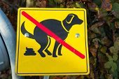 image of dog poop  - Sign of no dog keep city clean - JPG