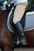 picture of girth  - Close up of rider legs with spurs on chestnut horse - JPG