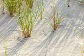 stock photo of wind blown  - Wind blown grass on fine sand dune - JPG