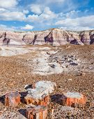 foto of petrified  - Petrified wood amidst towering hills with colorful bands of silt sand and gravel in the Blue Mesa area of the Painted Desert - JPG