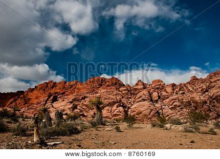 Cactus And Red Rock Canyon