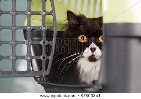 Cat In The Transporter