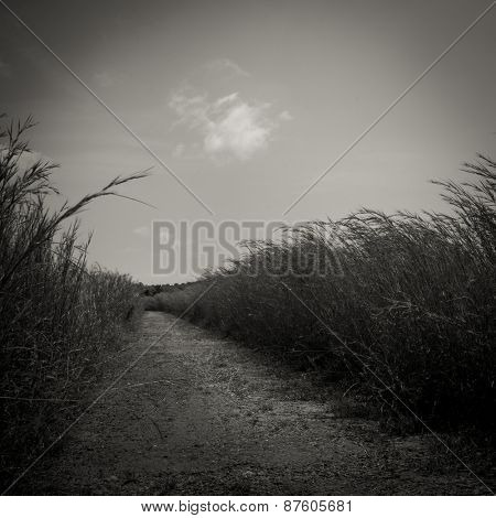 Narrow walkway through a grass field. An abstract b&w nature background.