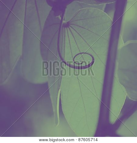Extreme close up of a plant. An abstract nature background.