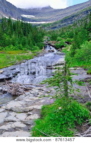 Mountain Stream And Wild Alpine Flowers On A High Alpine Trail In Glacier National Park