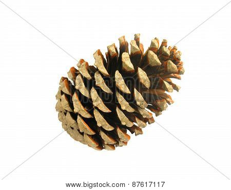 Beautiful Golden Pine Cone Isolated On White