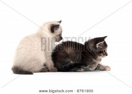 Two Kittens On White Background