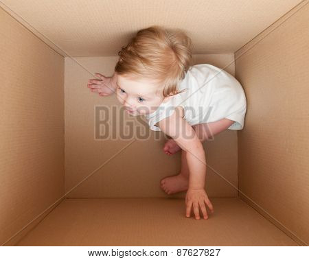 Young Child Plays In The Box