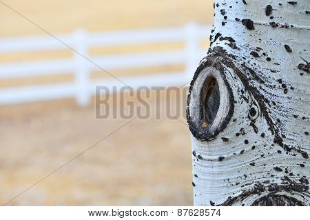 Rural County Aspen