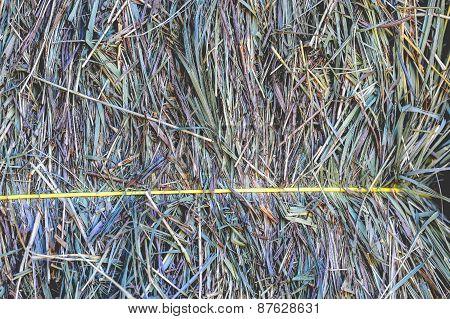 Green Hay Bale