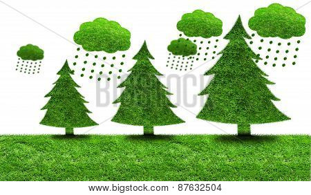 Green Fir Trees On A Patch Of Grass