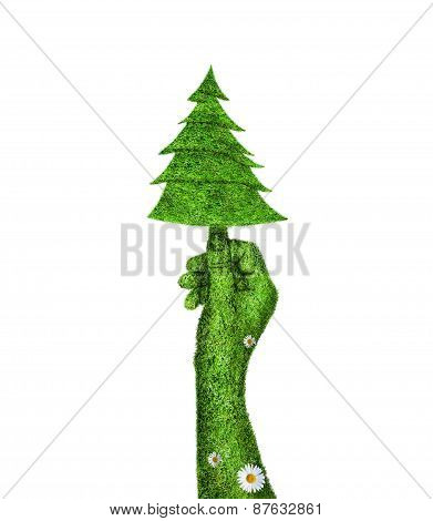 Green Fir Tree In The Hand Of Man.
