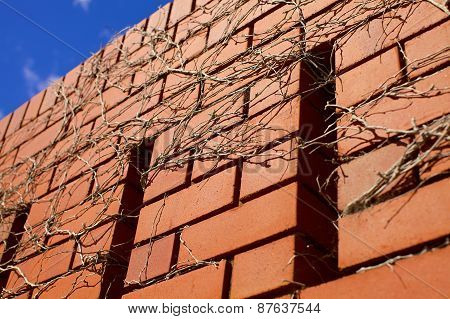 Blue skies over brick wall