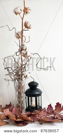 Cotton Plant With Bolls In Vase