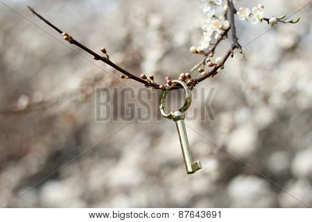 golden key on a blossom twig