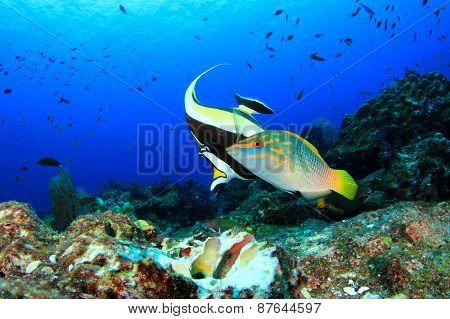 Fish feeding on coral