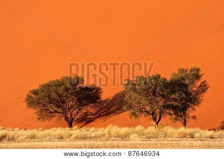 Red sand dune with African Acacia trees and desert grasses, Sossusvlei, Namibia, southern Africa