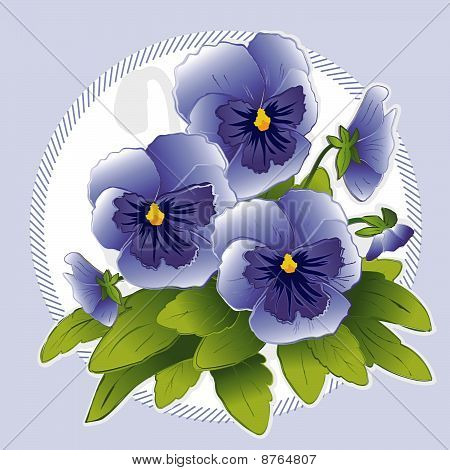 Sky Blue Pansies