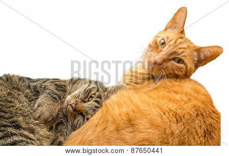 Cat relaxing with another cat.