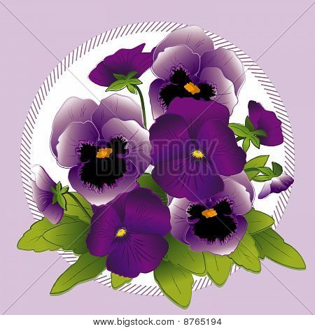 Purple & Lavender Pansies