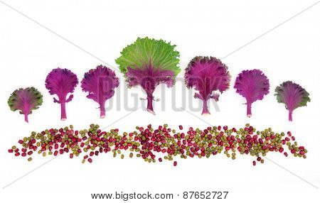 Cabbage with aduki and mung bean pulses in abstract design over white background.