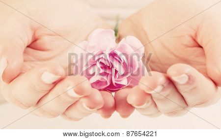 Pink soft flower in woman hands. Spa, protection, health care concept.