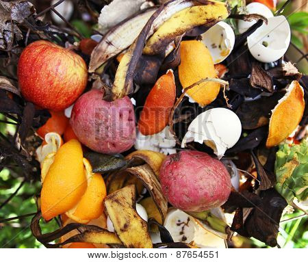 a compost pile in a backyard garden with rotting fruit and vegetables good for recycling or environmental designs