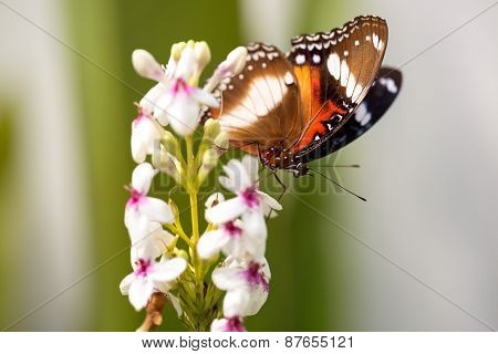 Nice colorful butterfly feeding on flower, summer day