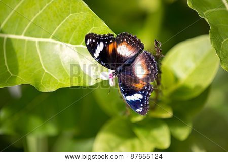 Beautiful butterfly with open wings, top view
