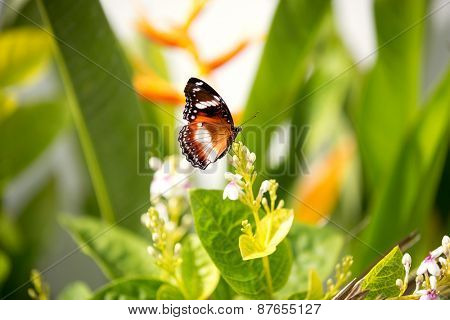 butterfly feeding on a white flower over green background
