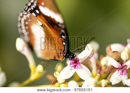 Close up of butterfly feeding on flower