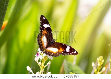 Nice colorful butterfly with open wings