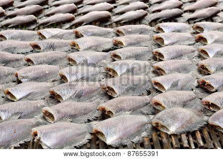 Sun Dried Salid Fish Before Cooking Sell In The Market In Thailand