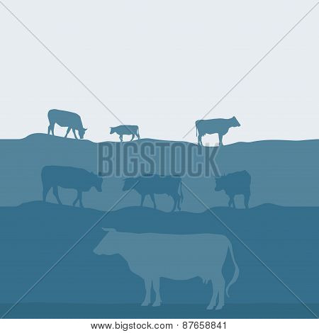 Cows silhouette graze in the field, landscape, sky, grass, pasture. Blue, gray background. Vector