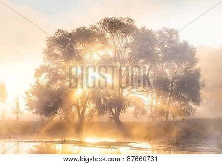 The rays of Sun through a fog and tree's silhouette at dawn