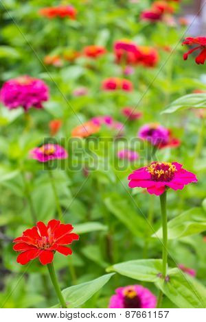 beautiful colorful wild flowers growing in the meadow in sunny summer day