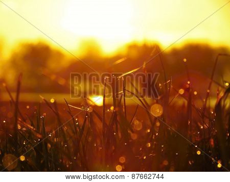 Sunrise And Grass With Sparkling Dew