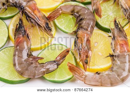 Raw tiger shrimps on plate.