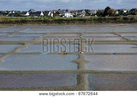 France, The Salt Evaporation Pond In Guerande