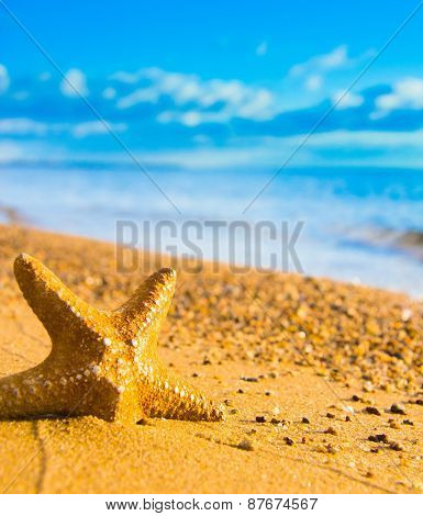 On a Beach Sea Starlet