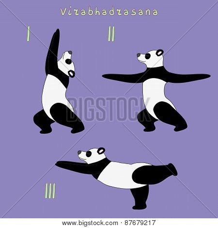 Yoga panda bear virabhadrasana (warrior) pose