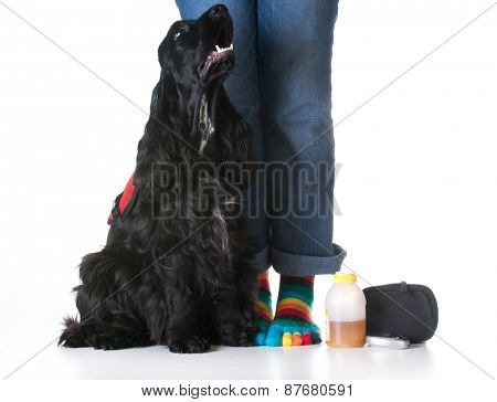 service dog - diabetic trained service dog sitting beside owner