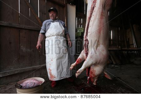 TURNOV, CZECH REPUBLIC - MARCH 5, 2011: Butcher cuts up a pig during the traditional Shrovetide public pig slaughter called zabijacka in Vsen near Turnov, Czech Republic.