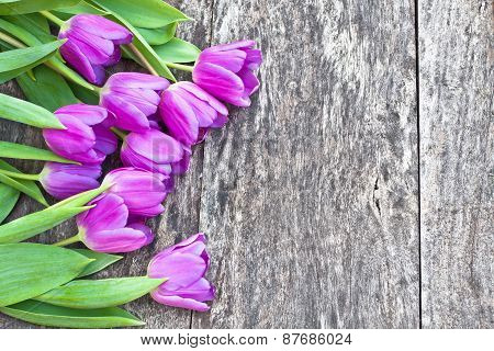 Bouquet Of Violet Tulips On The Oak Brawn Table