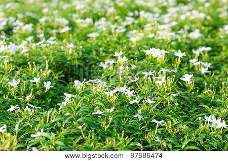 Inda Flower-04
