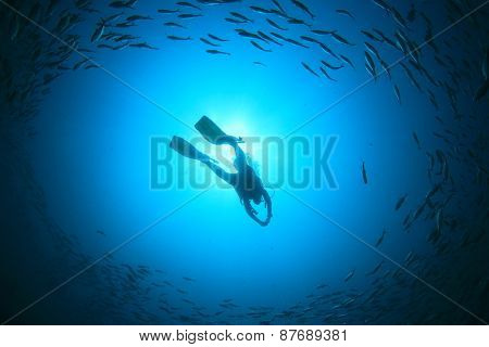 Silhouette scuba diver surrounded by fish