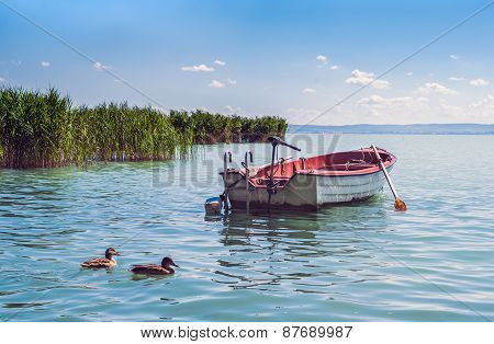 A Boat And Wild Ducks Floatinf In The Waters Of Lake Balaton In Hungary